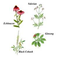 botánicos flores
