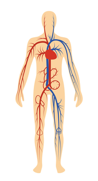 illustration of the central nervous system