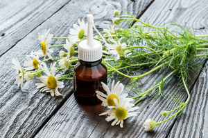 chamomile plant next to an essential oils bottle