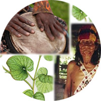 Collage of a shaman, drum and kava