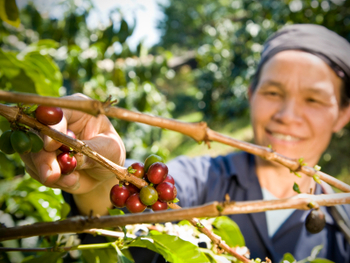 smiling farm worker picking fruit from tree