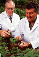 two men examining plants in a greenhouse