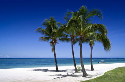 four palm trees on a white sand beach with the ocean, a clear and deep blue sky, and a patch of vivid green grass