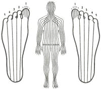 drawing of zones on feet